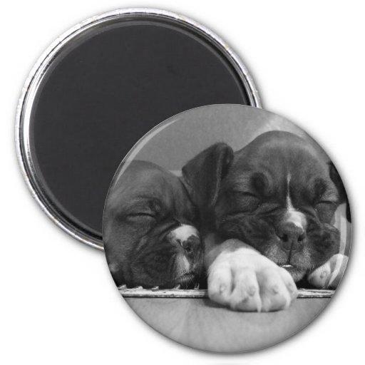 Imán de los perritos del boxeador el dormir
