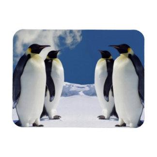 Imán de los pingüinos