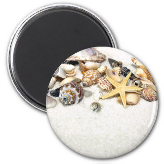 Imán de los Seashells