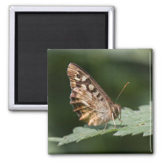 Imán de madera manchado de la mariposa