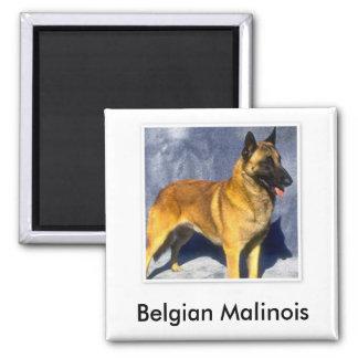 Imán de Malinois del belga