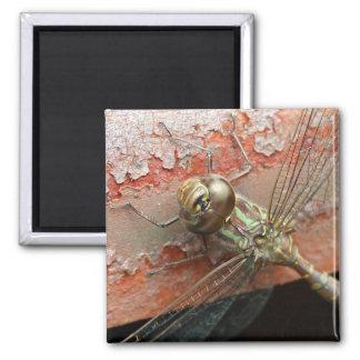 Imán de oro de la libélula