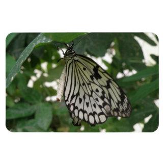 Imán de papel tropical de Flexi de la mariposa de