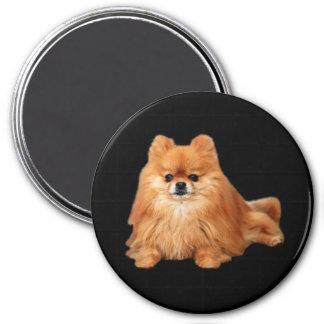 Imán de Pomeranian