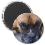 Imán de reclinación del perro del boxeador