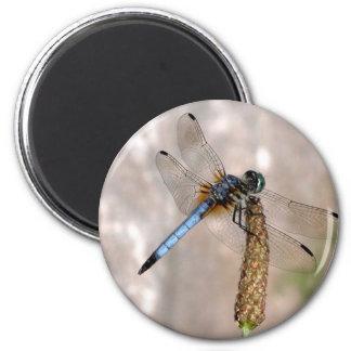 Imán de /Round de la libélula