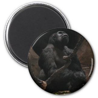 Imán de /Round del gorila