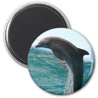 Imán de salto del delfín