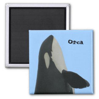 Imán de Spyhop de la orca