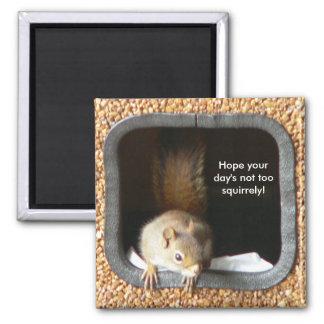 Imán de Squirrely