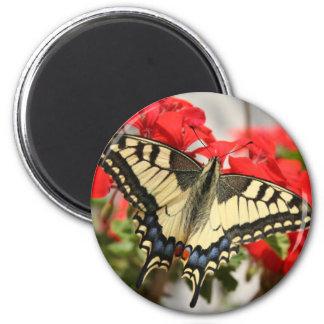 Imán de Swallowtail del anís