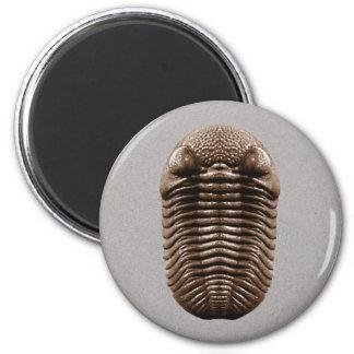 Imán de Trilobite