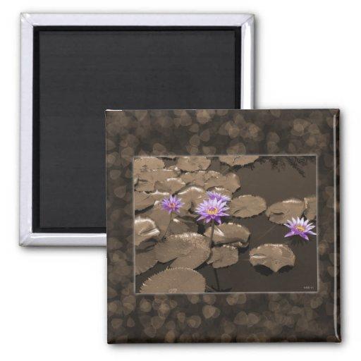 Imán de Waterlilies
