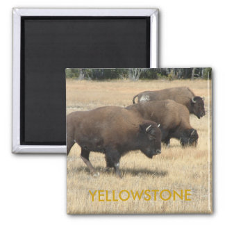 Imán de Yellowstone del búfalo