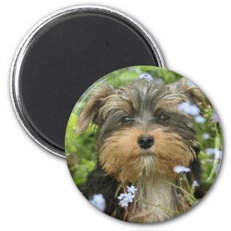 Imán de York Terrier