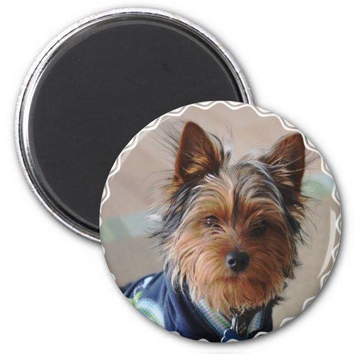 Imán de Yorkie Terrier