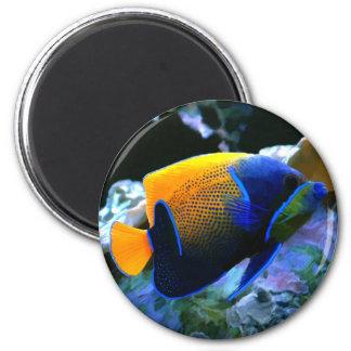 imán del angelfish