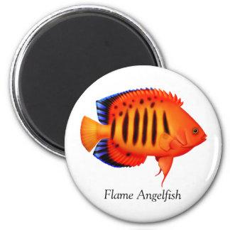 Imán del Angelfish de la llama del arrecife de