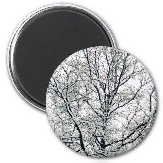 Imán del árbol del invierno