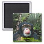 Imán del arte de la fauna del primate del CHIMPANC