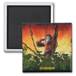 Imán del arte del orangután del bebé y de la fauna