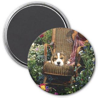 Imán del beagle en silla de jardín
