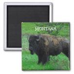 Imán del bisonte de Montana