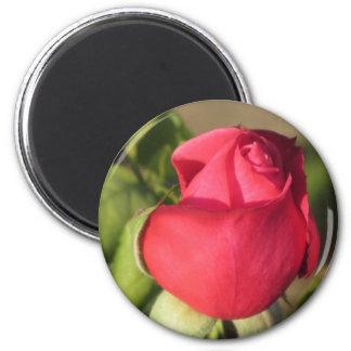 Imán del brote del rosa rojo