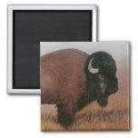Imán del búfalo