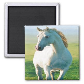 Imán del caballo blanco
