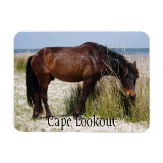 Imán del caballo salvaje del banco de Shackleford