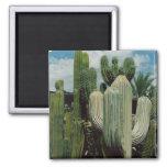 Imán del cactus