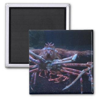 Imán del cangrejo japonés