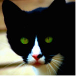 Imán del CAT Esculturas Fotograficas