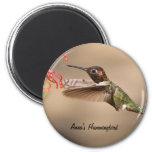 Imán del colibrí de Ana