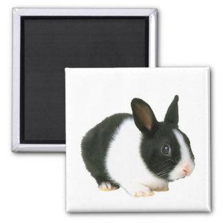 Imán del conejo de conejito