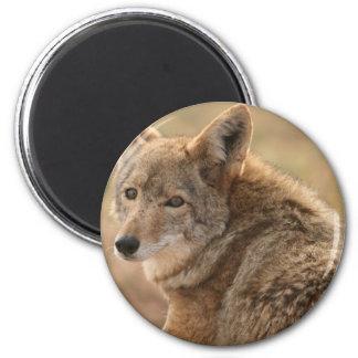 Imán del coyote