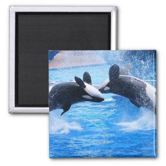Imán del cuadrado de la foto de la ballena