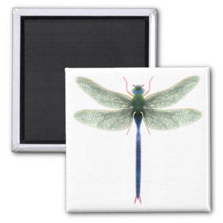 Imán del cuadrado de la libélula del arco iris