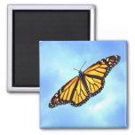 Imán del cuadrado de la mariposa de monarca