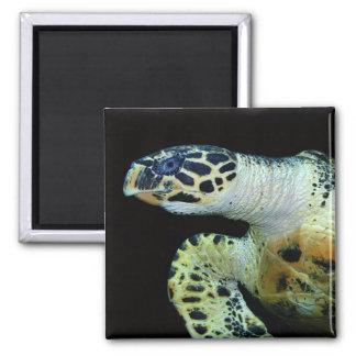 Imán del cuadrado de la tortuga de mar del Leather