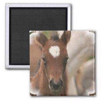Imán del cuadrado del bebé del caballo