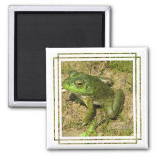 Imán del cuadrado del diseño de la rana