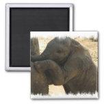Imán del cuadrado del elefante del bebé