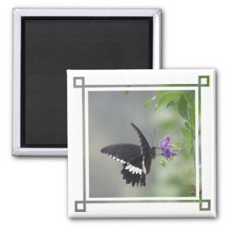 Imán del cuadrado del jardín de la mariposa