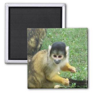 Imán del cuadrado del mono de ardilla