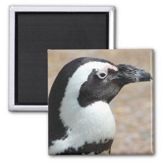 Imán del cuadrado del perfil del pingüino