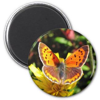 Imán del ~ de la mariposa del cobre americano