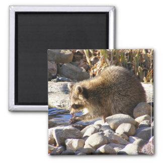 Imán del ~ del mapache del invierno