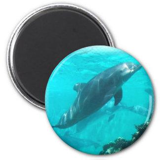 Imán del delfín de la natación